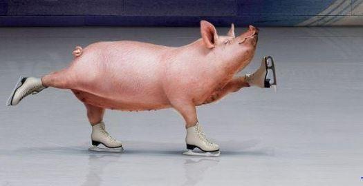 gris-o-skridskoforeningen
